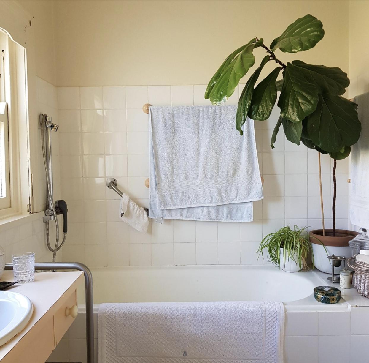 1930s heritage home bathroom before renovation bathtub fiddle leaf fig tree